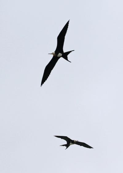 野鳥撮影記録2018年-9月  ⑤