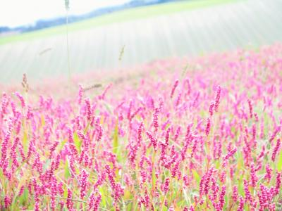 北海道の秋を 楽しむ旅 3日目
