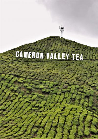 マレー半島陸路で縦断の旅 その② キャメロンハイランドの紅茶畑へ