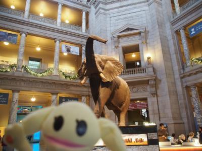 エノラゲイ見てスミソニアン巡って序にNew York(8)国立自然史博物館