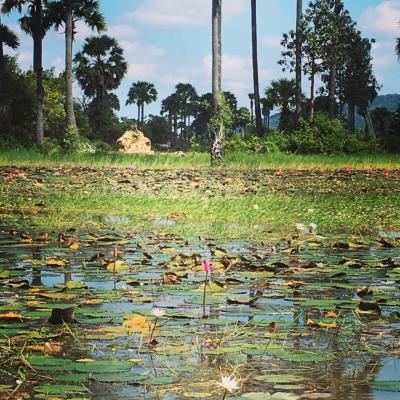 #アンコールワット郊外のおすすめ、田んぼと田舎観光ツアー