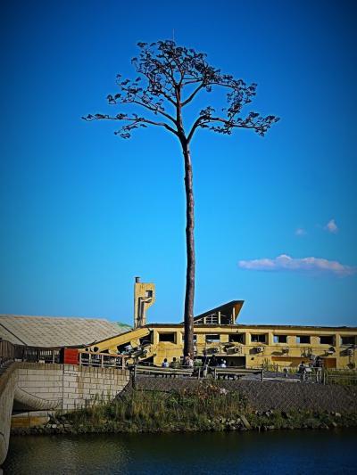 三陸南部-6 陸前高田 奇跡の一本松-会いに ☆津波災害から復興のシンボルに
