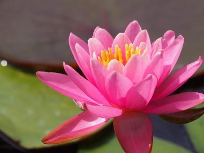 鎌倉の紅葉の塩害調査を兼ねていつのまにやら、日比谷花壇系グループの運営になっていた日比谷花壇大船フラワーセンターに行ってみた。