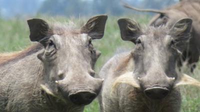 ケニア 赤道ほぼ直下の動物保護区 到着時間がちょと遅かった