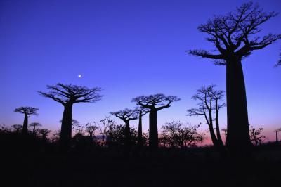 マダガスカルゆったり周遊12日間のツアーに参加 行ってきました! №1 航空機移動編(日本~マダガスカル・アンタナナリボ)