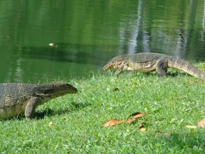 ルンビニー公園の「大トカゲ」