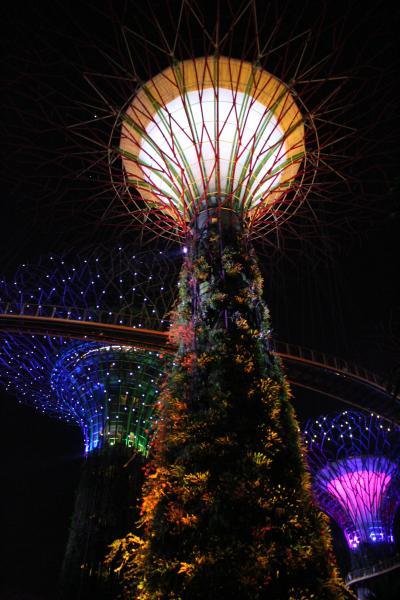 JGC修行始めました☆OKA-SINに挑戦!初めてのシンガポール【4】光のショーを楽しもう♪マリーナベイサンズの「スペクトラ」&ガーデンズインザベイの「OCBCガーデン・ラプソディ」