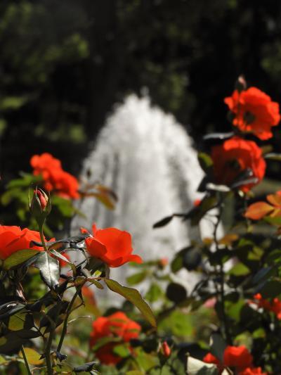 蝶が舞いバラが咲き始めた須磨離宮公園