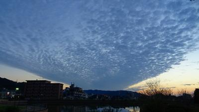 早朝散歩 久しぶりに宝塚市新池公園へ出かけました 下巻。