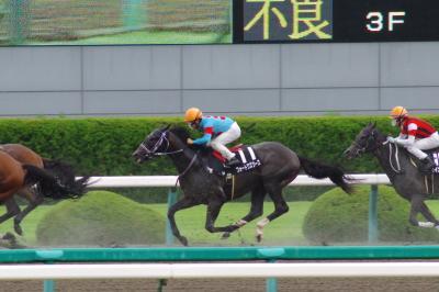 阪神競馬場 出資馬応援遠征