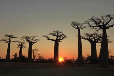マダガスカルゆったり周遊12日間のツアーに参加 行ってきました! №4 モロンダバ観光編(バオバブの並木道~愛し合うバオバブ~双子のバオバブ等)
