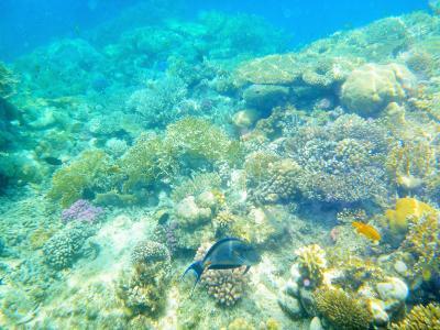 シナイ半島南端 見て良し潜って良しのラスモハメッド国立公園  UAE&エジプト4