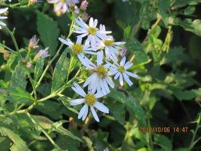 森のさんぽ道で見られた秋の山野草の花