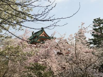 春の平安神宮神苑拝観