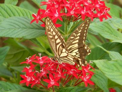 10月8日ふじみ野市西鶴ケ岡地区で見られた蝶