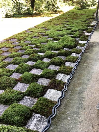 ハイシーズン前にゆっくり東福寺めぐり。ムクムク苔に癒される~