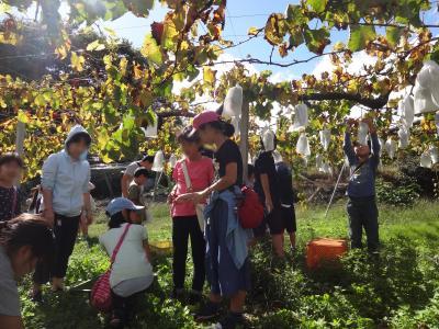 ブドウ狩りと稲刈りの秋の田舎体験は・・素敵な人たちとの出会い(1/3)スタートはブドウ狩り