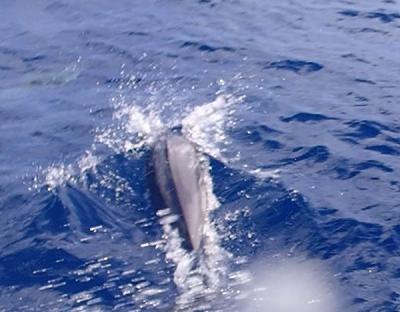 秋の沖縄本島と石垣島(20)石垣島からのダイビング。船で黒島、西表島へ