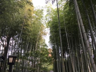 2018 修善寺一泊旅行で叔母さん孝行!