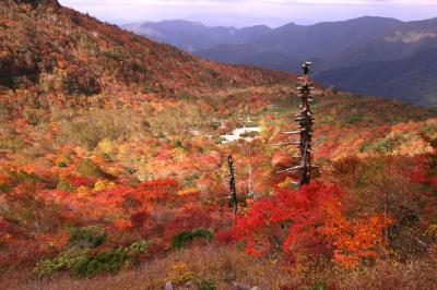 ◆ゴミ箱から拾ってきた?那須岳の紅葉