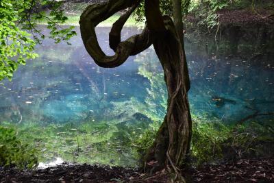 鳥海山の湧水めぐりと生岩ガキランチツアー 2018(山形県遊佐町)