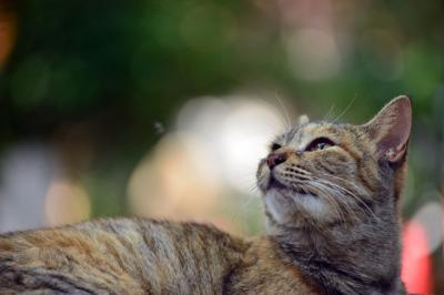 竜泉寺のネコさん