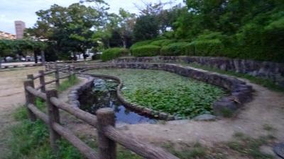 早朝散歩 途中で気が変わり安倉上の池へ 上巻。