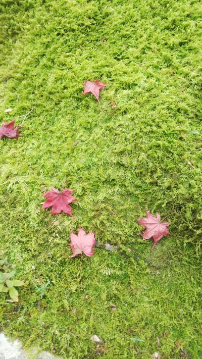 秋の京都、お墓参りと嵐山散策の旅
