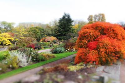秋真っ盛りのヨーテボリ植物園