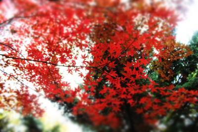 ヨーテボリ植物園の中の禅の空間
