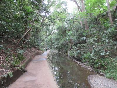 等々力渓谷をのんびり散歩しました