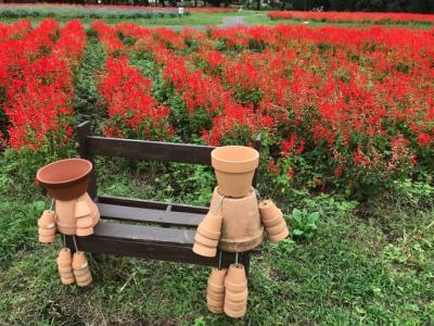 秋の花が咲き乱れる花の丘公園2018~サルビア・コスモス・コキアなど~