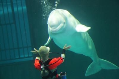 Under the Sea / ソロモンの指輪 - ヒトはイルカと話せるか? -