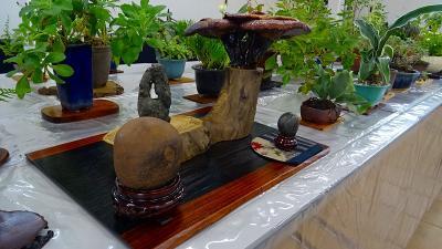 みどりのプラザで開催中の石草展の見学。