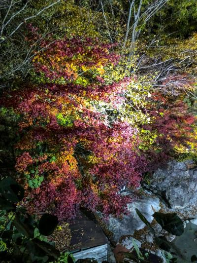 《2018.Oct》Capter Ⅰ,16th 2day driving of visit to Post Office in GIFU&TOYAMA,with view of the scarlet maple leaves.