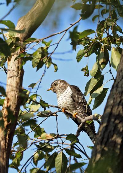 野鳥撮影記録2018年-10月  ⑥