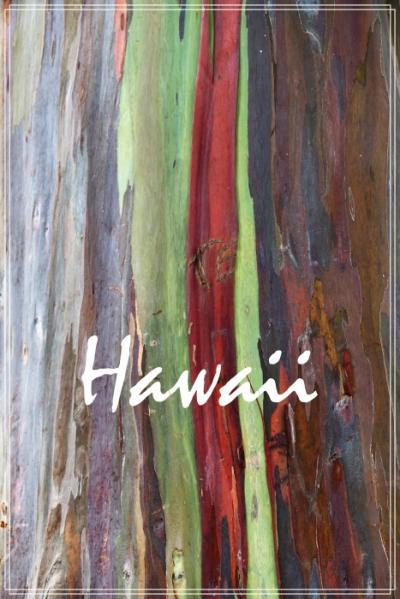 Hawaii③ ハワイビギナーの私たちが準備したこと&気に入ったこと&気になったこと