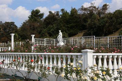 「秘密の花園」で秋バラを楽しむ@生田緑地ばら苑