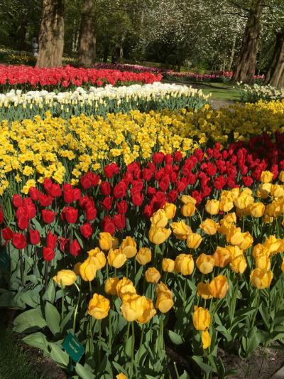 春のベルギー*オランダ*ドイツ8日間ひとり旅③キューケンホフ公園