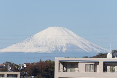 裏山から見る朝の富士山