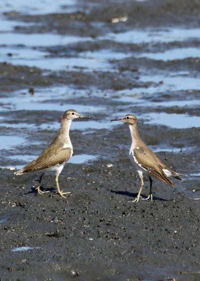 野鳥撮影記録2018年-10月  ⑦