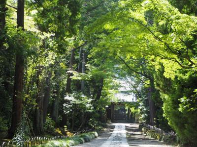 寿福寺 源実朝公 若くして暗殺され、源氏が途絶えた悲しい地に想う。鎌倉三十三観音霊場