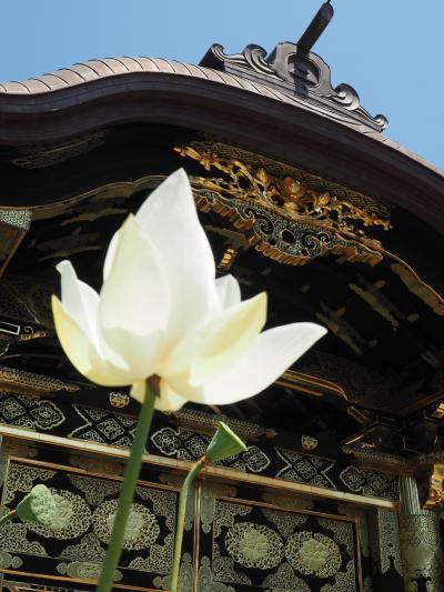 建長寺 唐門の豪華さ・方丈から夏の庭園を味わいました。半僧坊。やはり素晴らしい! その②