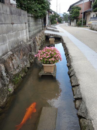 竹田の街歩き。錦鯉がたくさんいるきれいな街です。
