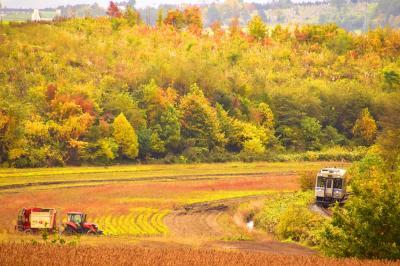 秋の北海道、道央地方を巡る旅 ~JR富良野線の紅葉を見に美瑛(上富良野)の丘に訪れてみた~