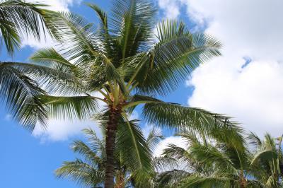 2018.夏 hawaii