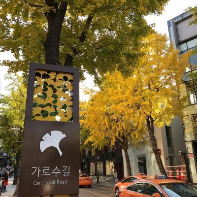 2018 JGC修行 10月【ソウル編】8回目のソウルはビジネス日帰りde 江南を歩く