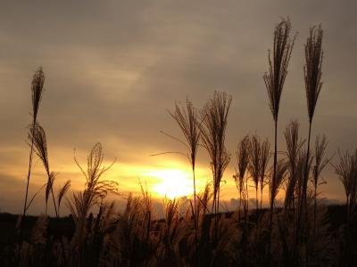 奈良 曽爾高原