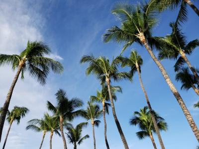2018年10月 ハワイ島旅行 (出発編)