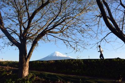 散歩 2018.10.21 =雪が積もった綺麗な富士山が見えました=